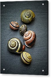 Lady Bug And Snail Shells 1 Acrylic Print