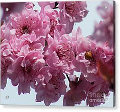 Acrylic Print featuring the photograph Lady Bug by Victor K