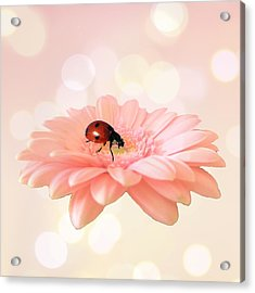 Lady On Pink Acrylic Print by Sharon Lisa Clarke