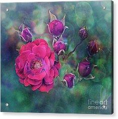 Lady Rose Acrylic Print