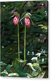 Lady Slipper Acrylic Print