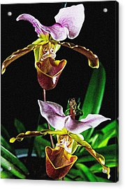 Lady Slipper Orchid Acrylic Print by Elf Evans