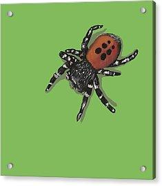 Ladybird Spider Acrylic Print by Jude Labuszewski