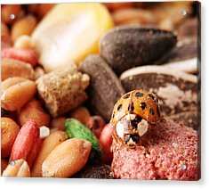 Lucky Ladybug At The Park Acrylic Print by Belinda Lee