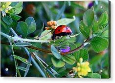 Ladybug Haven Acrylic Print