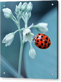 Ladybug Acrylic Print by Mark Fuller