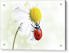Ladybug On Daisy Flower Acrylic Print by Pics For Merch
