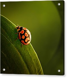 Ladybug  On Green Leaf Acrylic Print by Johan Swanepoel