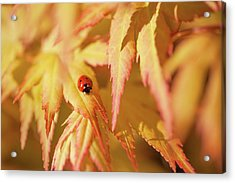 Ladybug Think Good Luck Acrylic Print by Jenny Rainbow