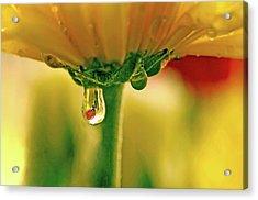 Ladybug View Acrylic Print