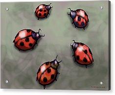 Ladybugs Acrylic Print by Kevin Middleton