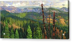 Acrylic Print featuring the painting Ladycamp by Steve Henderson