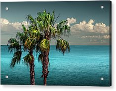 Laguna Beach Palm Trees Near La In Southern California Acrylic Print by Randall Nyhof