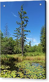 Acrylic Print featuring the photograph Lake Birkensee Nature Park Schoenbuch Germany by Matthias Hauser