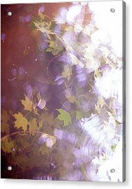 Lake Capture2 Acrylic Print by Lacey Renae