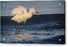 Lake Chapala Egret Acrylic Print by Dane Strom
