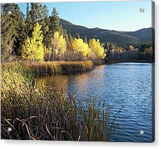 Autumn At Cox Lake Acrylic Print