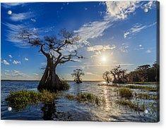 Lake Disston Cypress Paradise Acrylic Print