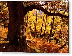 Lake District - Fall Colors Near Aira Force Acrylic Print by Dave Lawrance