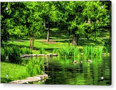 Acrylic Print featuring the painting Lake Ellyn Geese by Christopher Arndt