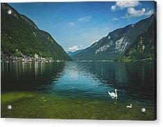Lake Hallstatt Swans Acrylic Print
