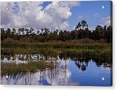 Lake In Florida Acrylic Print