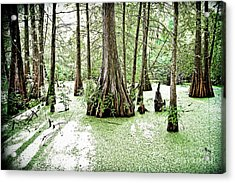 Lake Martin Swamp Acrylic Print by Scott Pellegrin