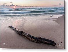 Acrylic Print featuring the photograph Lake Michigan Driftwood by Adam Romanowicz