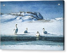 Lake Michigan Swans Acrylic Print by Dennis Cox