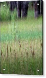 Lake's Edge Acrylic Print