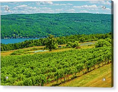 Acrylic Print featuring the photograph Lakeside Vineyard I by Steven Ainsworth