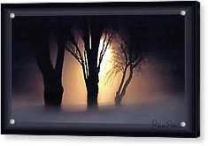 Lamplit Silhouetted Trees In Fog - Signed Limited Edition Acrylic Print