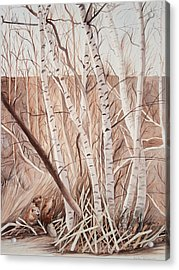 Land Of The Silver Birch Acrylic Print