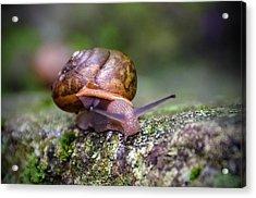 Land Snail II Acrylic Print