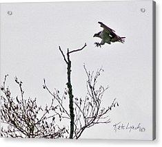 Landing Acrylic Print