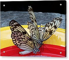 Landing On Mars Acrylic Print