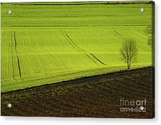 Landscape 4 Acrylic Print