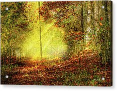 Landscape - Sunbeams - Woodland Trail Acrylic Print by Barry Jones