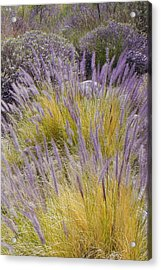 Landscape With Purple Grasses Acrylic Print by Ben and Raisa Gertsberg