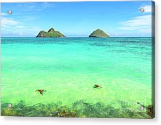 Lanikai Beach Two Sea Turtles And Two Mokes Acrylic Print