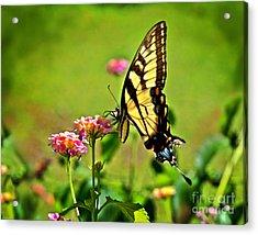 Lantana Monarch Acrylic Print by Jeff McJunkin