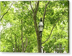 Lanterns Among The Trees Acrylic Print
