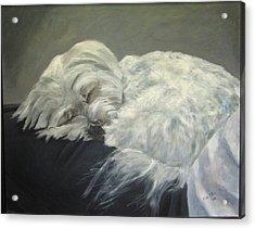 Lap Dog Acrylic Print by Elizabeth Ellis