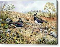 Lapwing Family With Goldfinches Acrylic Print by Carl Donner