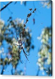 Large Australian Spider Acrylic Print by Steven Ralser