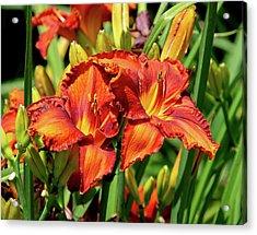 Large Deep Orange Tiger Lilys Acrylic Print