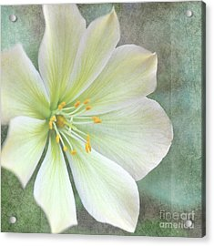 Acrylic Print featuring the pyrography Large Flower by Lyn Randle