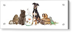 Large Group Of Pet Animals Together Acrylic Print