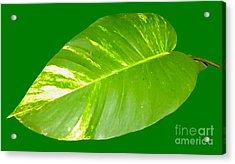 Acrylic Print featuring the digital art Large Leaf Art by Francesca Mackenney