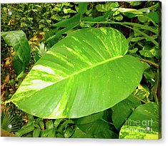 Acrylic Print featuring the photograph Large Leaf by Francesca Mackenney